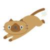 猫よけ対策に超音波